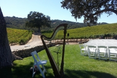 Jan-Walters-Vineyard-wedding